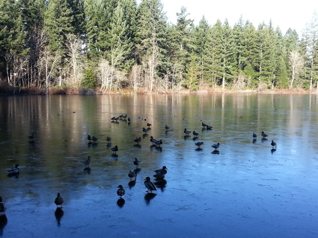 It was clear and cold on January 1. We decided to ring in the year with a walk around the lightly frozen lake.