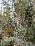 Although spring is almost here, there is still frost on the spiderweb.